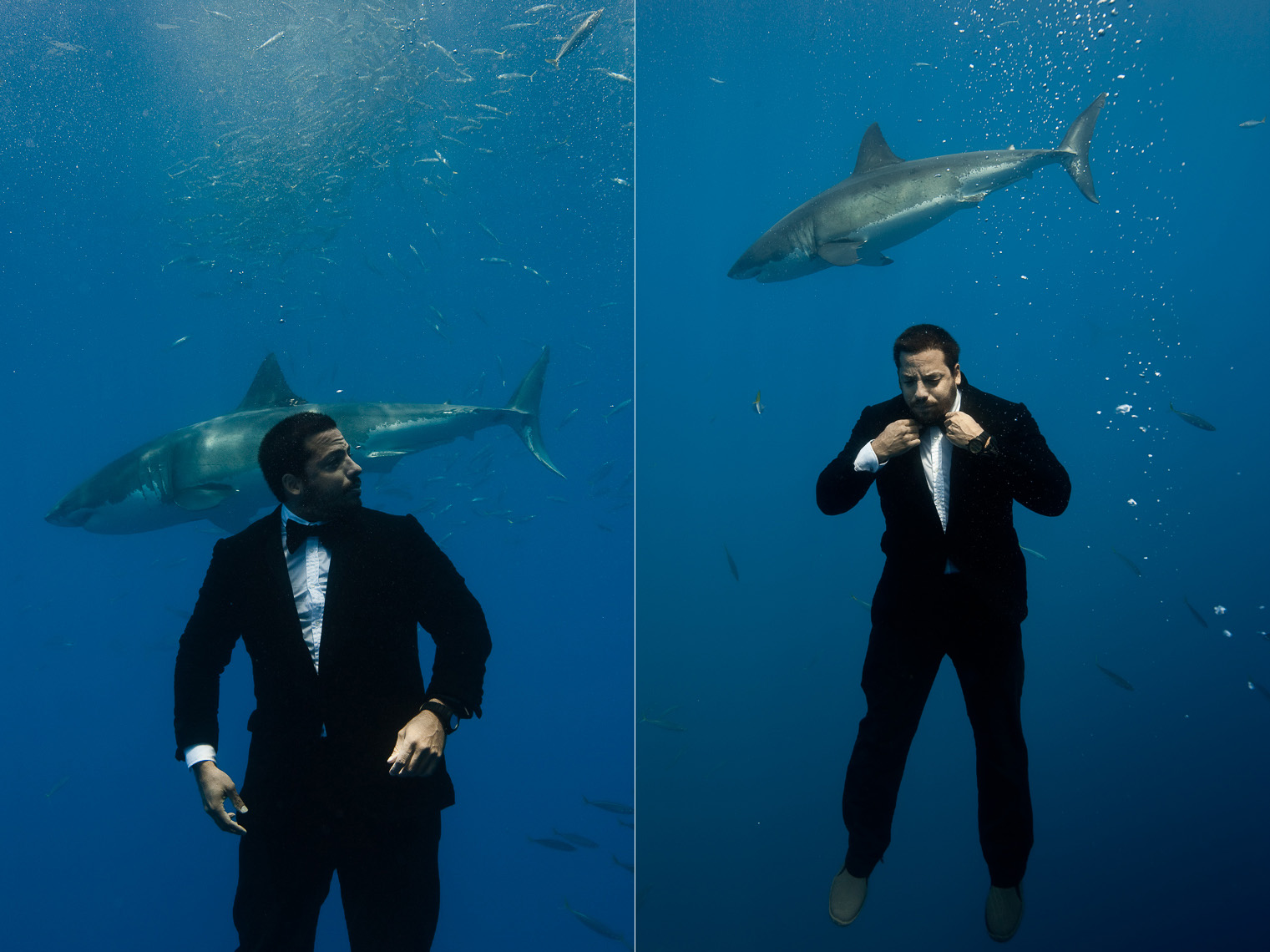 David Blaine & White Sharks