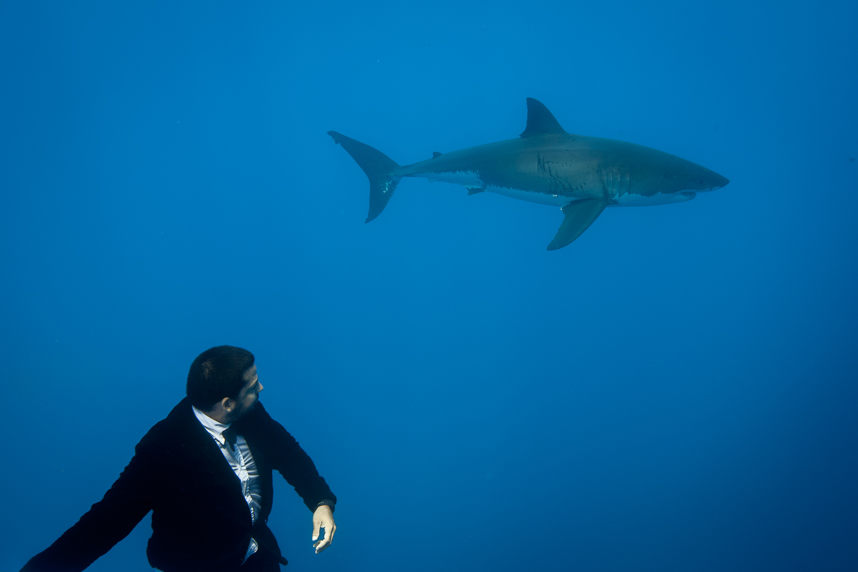David Blaine & Great White Sharks